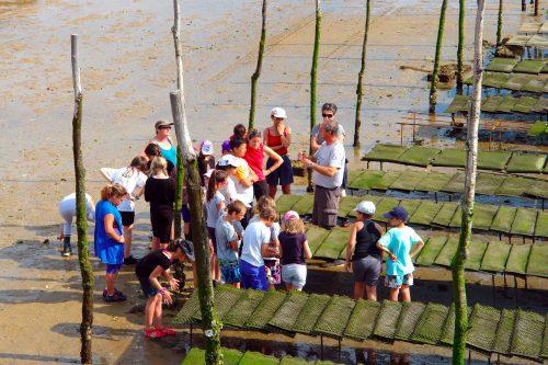 Les enfants découvrent les parcs à huîtres